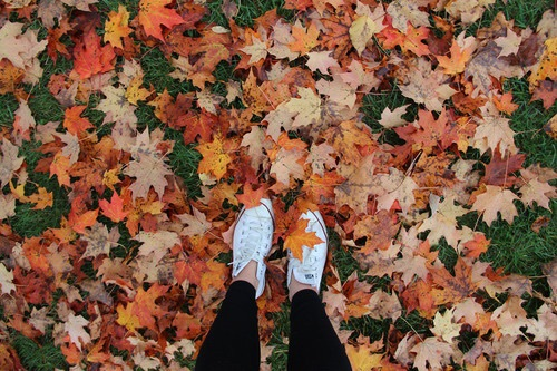 article, autumn, and blanket image