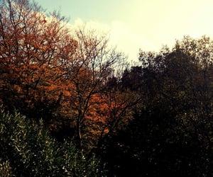 autumn, fall, and cozyautumnevenings image