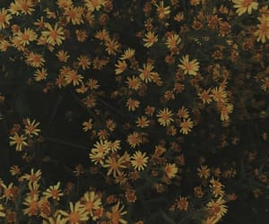 daisies, daisy, and film image