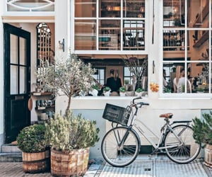 bicycle, flowers, and street image