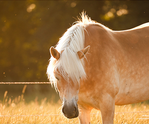 horse, beautiful, and cute image