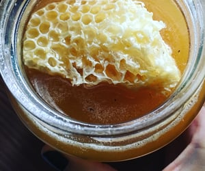 bees, food, and honey image