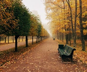 fall, leaves, and park bench image