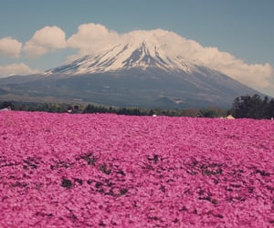 flowers, pink, and mountains image