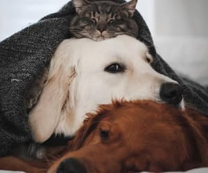 animals, cat, and dog image