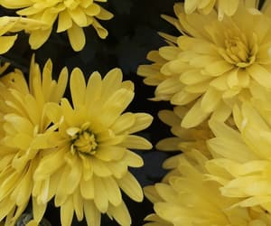 autumn, lovely, and yellow image