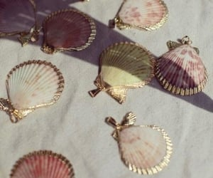 shell and aesthetic image