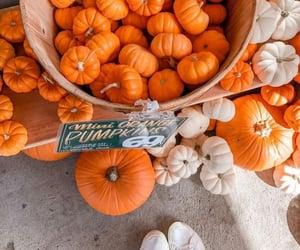 outdoors, pumpkins, and Halloween image