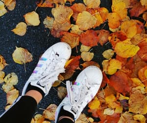 adidas, autumn, and trainers image