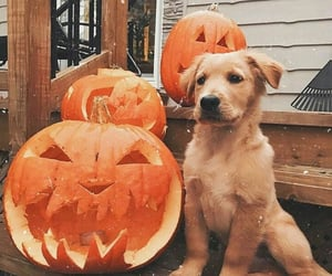 dog, animal, and Halloween image