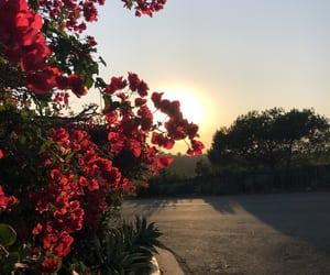 flower, Santa Barbara, and usa image