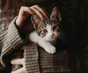 cat, vintage, and inspiration image
