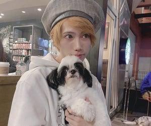 beauty, dog, and J-pop image