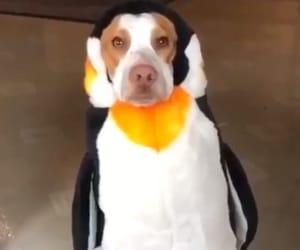 costumes, dog, and Halloween image