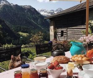 aesthetic, animals, and breakfast image