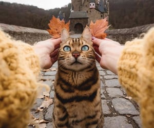 autumn, nature, and love image