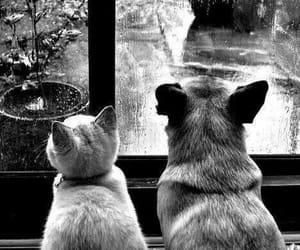 cat, dog, and rain image