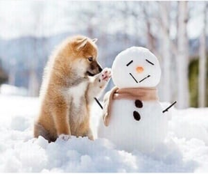 dog, snow, and cute image