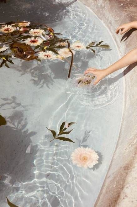 flowers, aesthetic, and water image