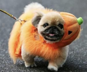 article, costumes, and dog image