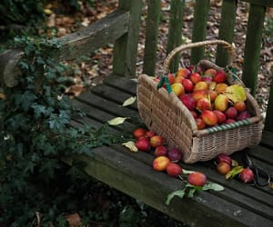 autumn and apples image