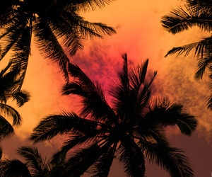 palms, photography, and beach image