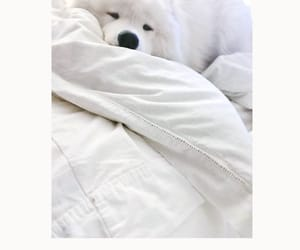 background, pet, and puppy image