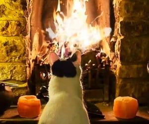 cat, fire, and animals image