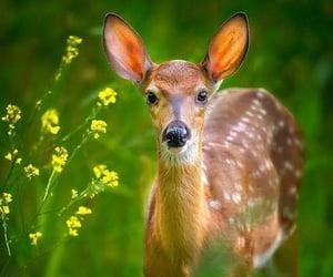 Animales, belleza, and cervatillo image