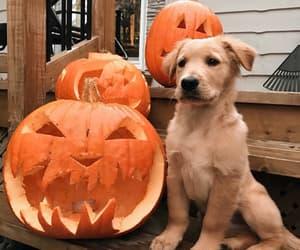 dog, animal, and Halloween image