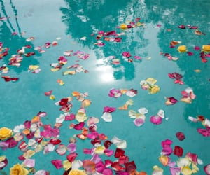 flowers, water, and petals image