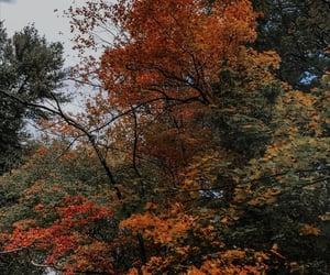 adventure, autumn, and dark image