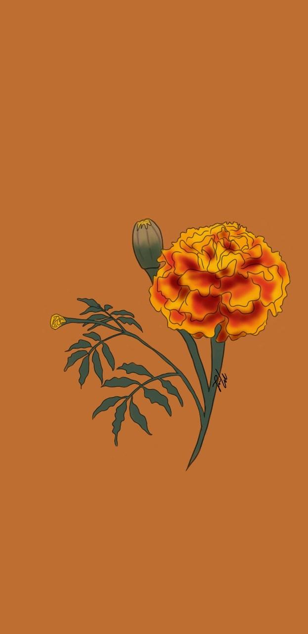 Cempasuchil Flower Drawing   Best Flower Site
