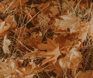 autumn, maple leaves, and plants image