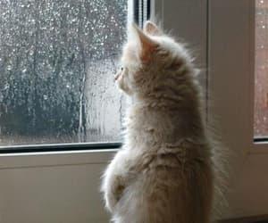 cat, rain, and kitten image