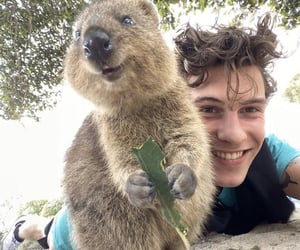 shawn mendes, quokka, and shawnmendes image