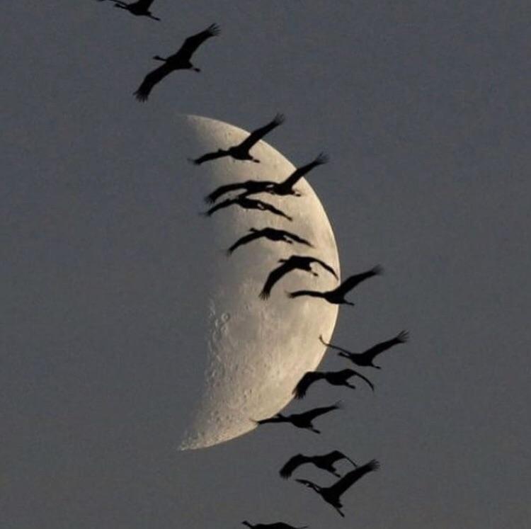 moon, bird, and sky image