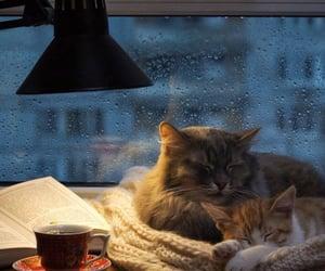 cat, rain, and cozy image