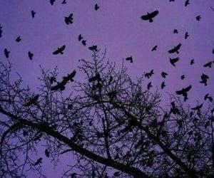 purple, birds, and Halloween image
