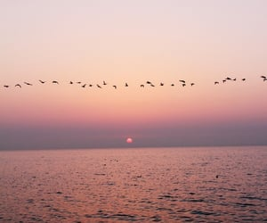 bird, sea, and sunset image