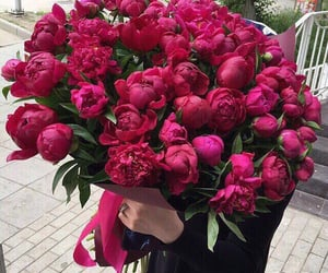 flowers, beautiful, and peonies image