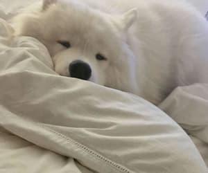 animal, dog, and bed image