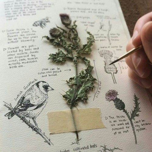 bird, book, and aesthetic image