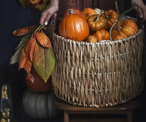 autumn, decorations, and pumkins image