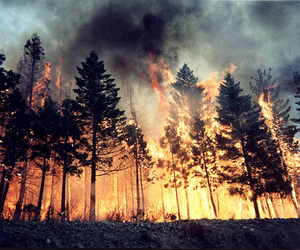 fire, forest, and tree image