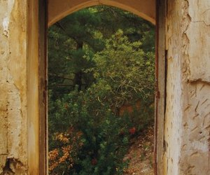 green, trees, and window image