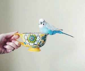 blue birds and cute image