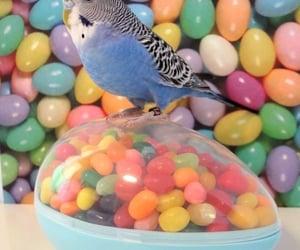 bird, bluebird, and candy image