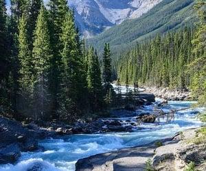 Banff National Park and alberta canyon ... image