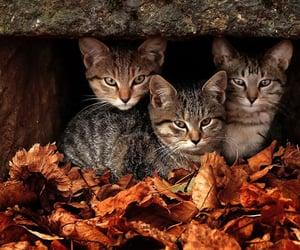 autumn, colors, and season image
